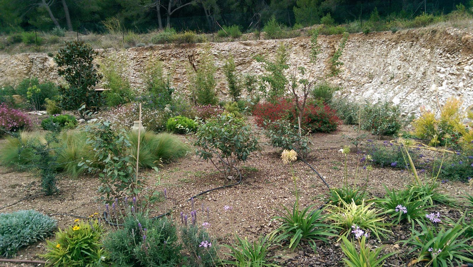 Cr ation d 39 un jardin m diterran en sur la c te bleue for Creation jardin mediterraneen