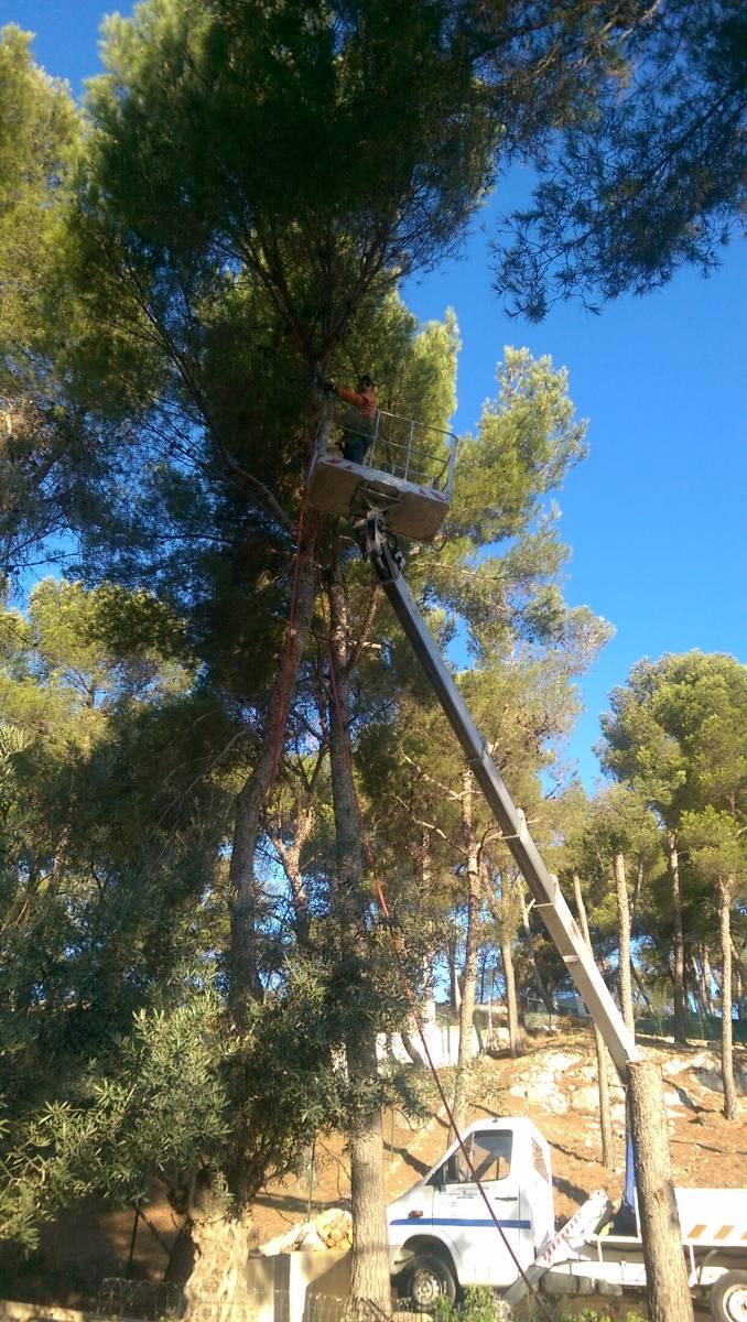 Abattage d 39 arbres et mise en s curit de propri t s bois es ensues la redonne elagage et - Arbre trentenaire en limite de propriete ...