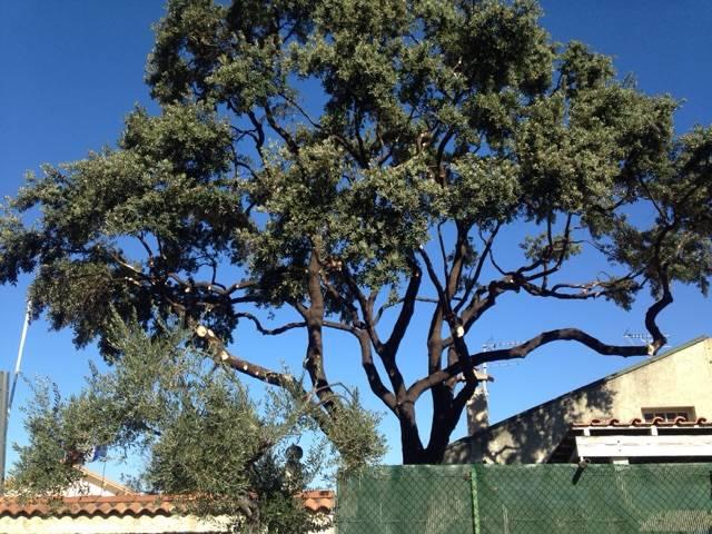 Lagage et taille de gros arbres entre martigues et saint for Entretien jardin istres
