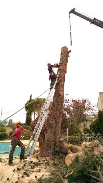Ou trouver un professionnel de l 39 abattage d 39 arbre c te for Prix de l elagage d un arbre